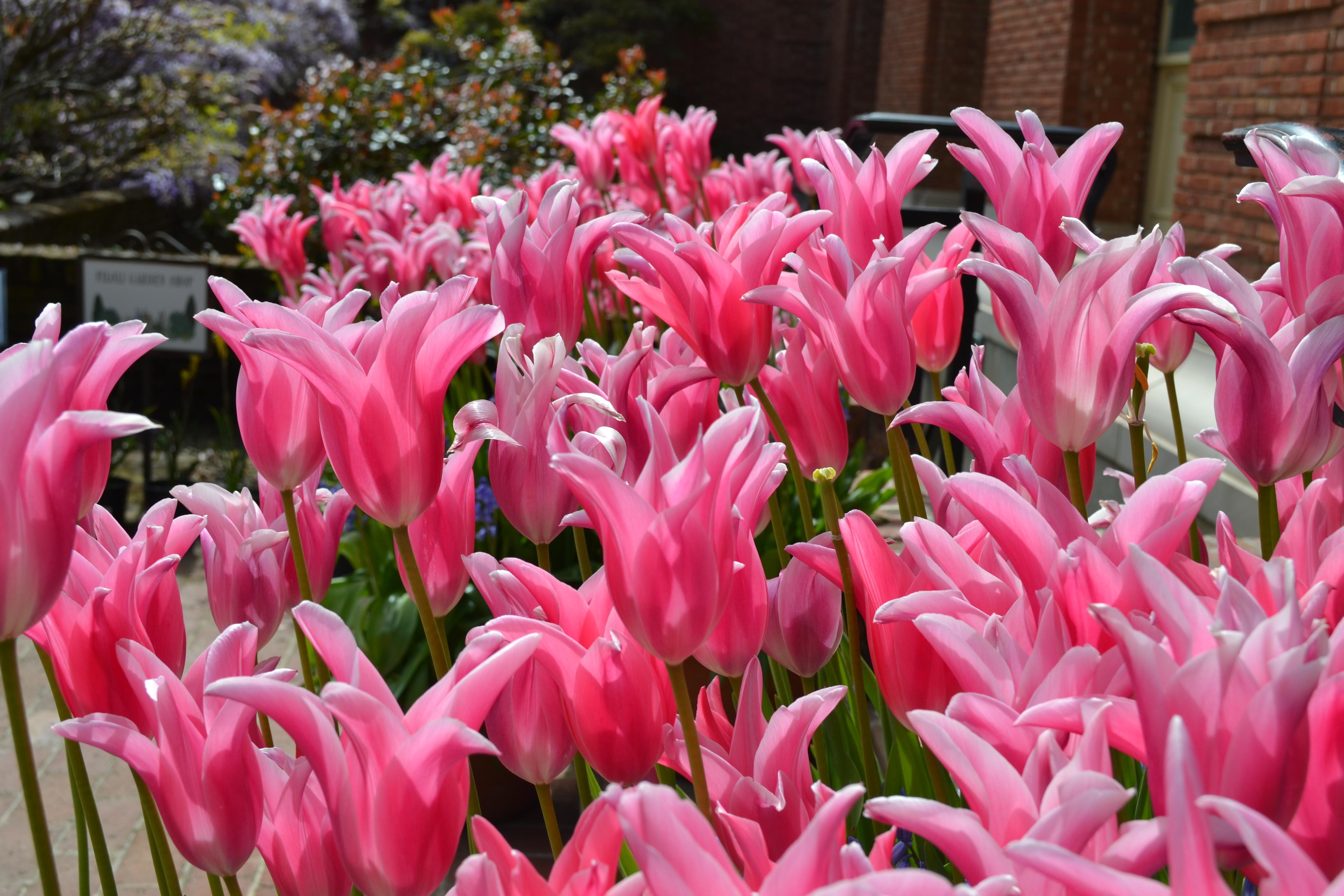 Garden Beauties Floralove